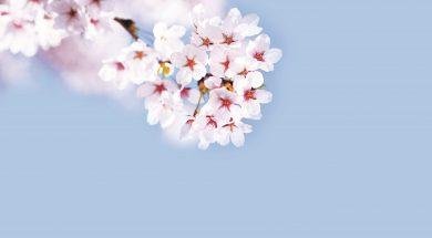 cherry-1591441237960-2127
